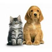 Pet Survival  (5)