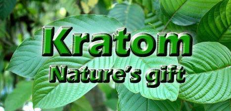 Kratom - Natures Gift